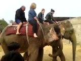 Enjoy Elephant safari in jaipur with trained Elephants @ Elefamily.co