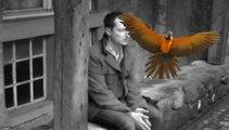 Tristesse des oiseaux en slip - Raphaël Zacharie de IZARRA l chérissait leurs pieds, suivait leurs pas, s'attachait à leurs chats, s'affichait avec leurs appas