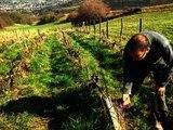 Un viticulteur bio au tribunal pour avoir refusé d'utiliser des pesticides - 24/02