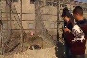 Evinde kurt besledi, bin 756 lira ceza aldı