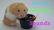 Hamster Actions and Sounds