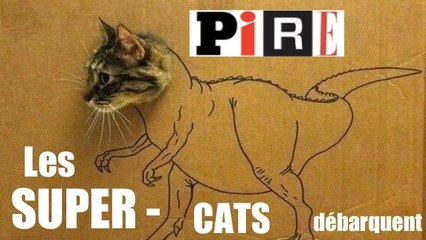 Les SUPER-CATS débarquent