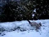 Arwen et la neige Landi hiver 2005