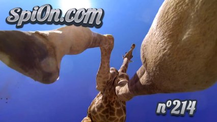 Le Zap de Spi0n n°214 - Zapping du Web - Vidéo Dailymotion
