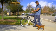 Lucky Dog - Bike Training