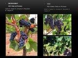 Vente vignoble, propriété viticole dans le Golfe de Saint-Tropez