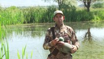 Duck Hunting: Two Run-And-Gun Decoy Sets by Outdoor Life