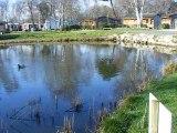 Camping Bordeaux lac