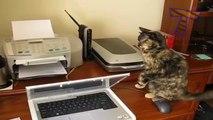 Des chats débiles font des truc débiles! Compilation d'animaux marrants...