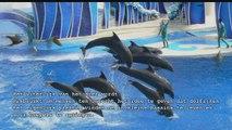 Dolfijnen in gevangenschap
