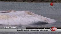 Tunisie - Une baleine de 10 mètres repêchée par les marins à Sidi Bou Said
