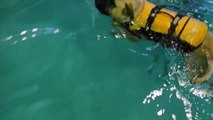 Bogart the Puppy Goes Swimming