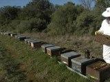 Abeilles: le printemps précoce ne suffit pas à rassurer les apiculteurs - 10/03