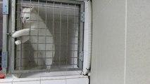 Un chat très intelligent : il peut ouvrir sa cage quand il veut! Trop mignon...