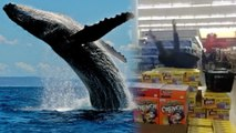 'Whaling' is the New Vine Trend That's Probably Already Over