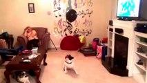 Un chien joue avec un ballon à l'hélium