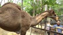 Zoo in Wat Bang Kung Temple Thailand