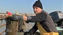 Météo : Les pêcheurs ont repris la mer (L'Aiguillon-sur-Mer)