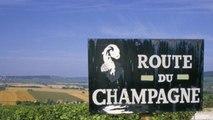 Wine 101 - Champagne & Sparkling Wines