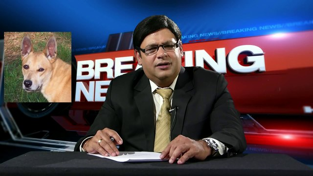 Arnab Barks : Bow Bow Bow all the way