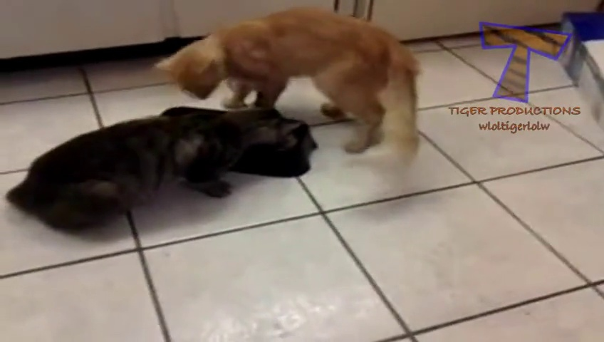 Adorable cats and dogs fighting at Dinner time!