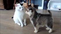 Curious Puppies Adorably Investigate Patient Cat