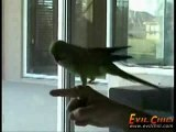 The Most Amazing Parrot Ever