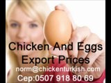 Turkish Eggs   Exporters and Eggs Prices www.chickenturkish.com.