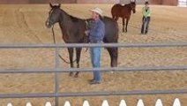 Courageous Cat Blindsides Unsuspecting Horse
