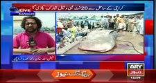 Whale shark caught off Karachi beach