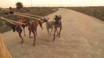"""""""Febrero, El miedo de los galgos"""" - Trailer du documentaire espagnol"""