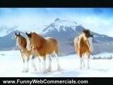 Budweiser Horses vs. Asses Commercial