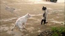 Kedilerin Bruce LEE si Burada