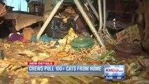 Plus de 100 chats découvert dans une maison
