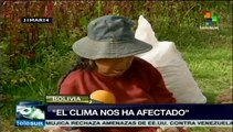 Fenómenos climáticos han afectado cultivos de papa en Bolivia