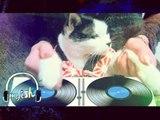 Beatboxing Cat vs. Beatboxer Aibo - myISH