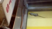 Rats Throw After Hours Party at NYC Dunkin Donuts
