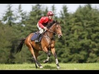 Les chevaux montage