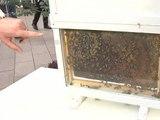 Bruxelles défend les abeilles - 04/04