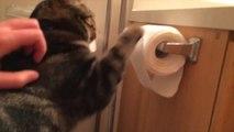 Un chat mignon déroule tout le papier toilette.
