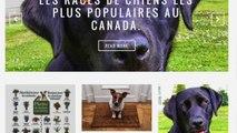 """Éducation canine : Présentation du blogue """"En Compagnie des Chiens""""."""