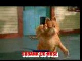 DANSE OF CAT ON TAMIL SONG