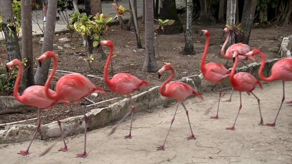 Ardastra Gardens/Zoo,Bahamas
