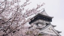 Cherry Blossoms and Japanese Castle Make for a Unique Sight