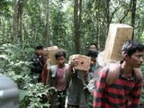 Three Cambodian illegal loggers killed by Thai officials