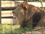 Ouverture du parc zoologique de Vincennes: l'heure est aux derniers préparatifs - 11/04