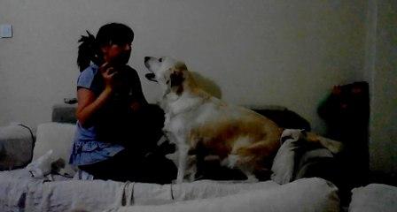 Annesinin Azarladığı Çocuğu Koruyan Köpekler