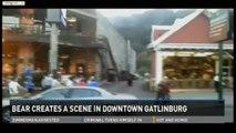 Un ours surprend les passants dans les rues d'une ville du Tennessee