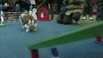 Saute, saute, saute, mon petit lapin