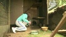 Environnement : Réduire les déchets avec une poule (Lannion)